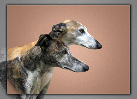 Galgos Caifas and Jandra, together ALWAYS